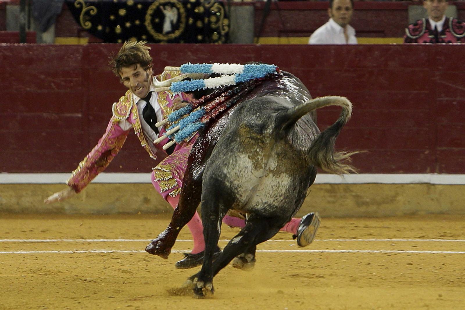 Padilla tropieza, antes de ser embestido por el toro.